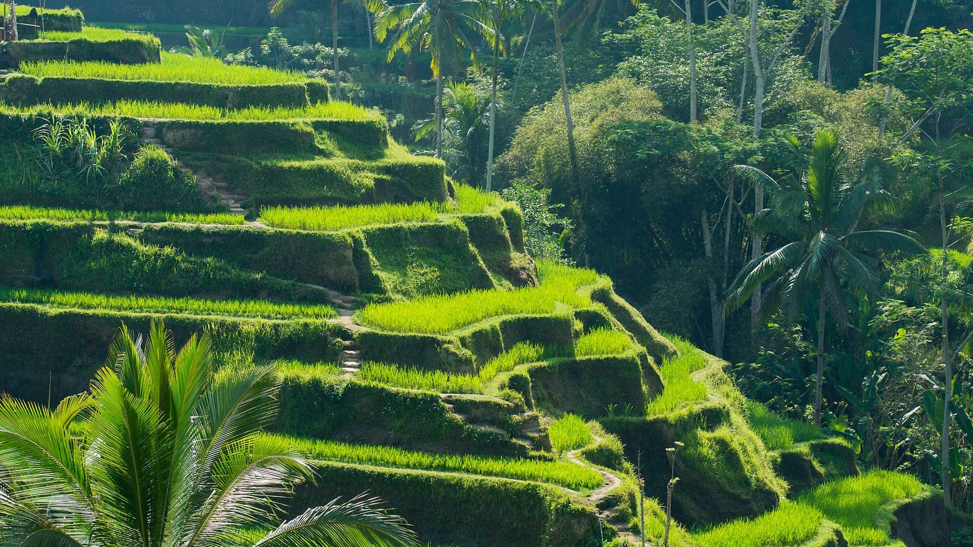 Exterior: Christmas & New Year's At The Legian Bali